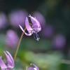 Spring ephemeral Ⅰ