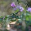 Spring ephemeral Ⅱ