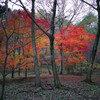 Colored leaves of the last year