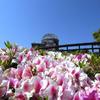 春のドーム