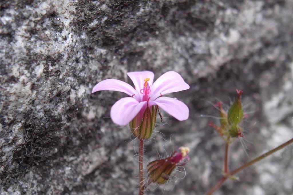 石垣に咲く一凛の花