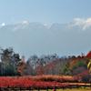 開田高原・御嶽山を望む