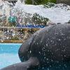 噴水クジラ