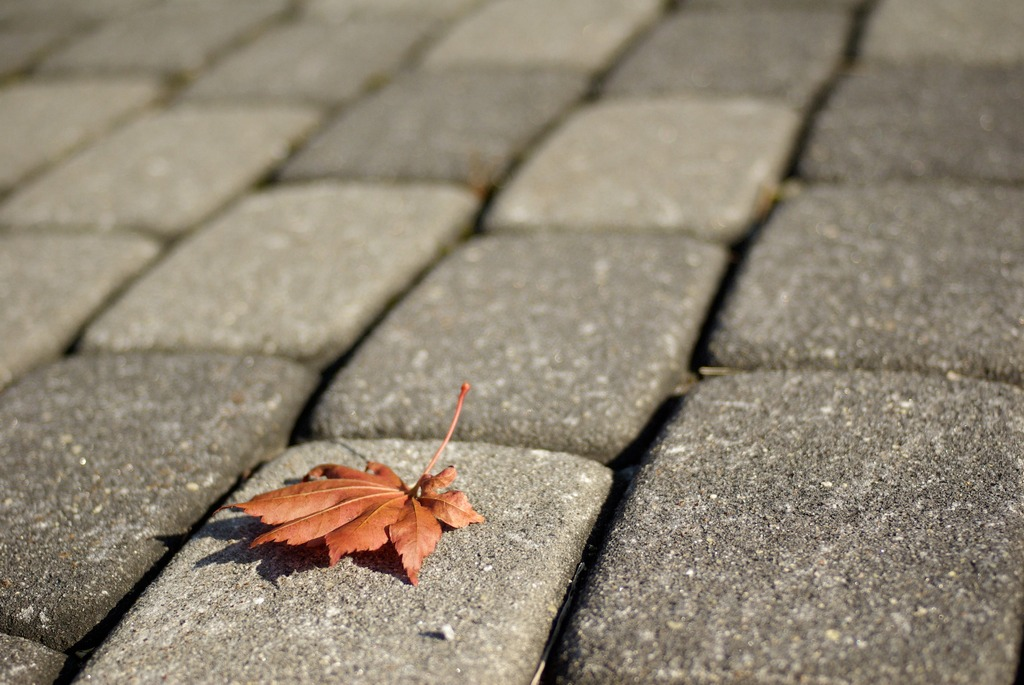 地上の紅葉