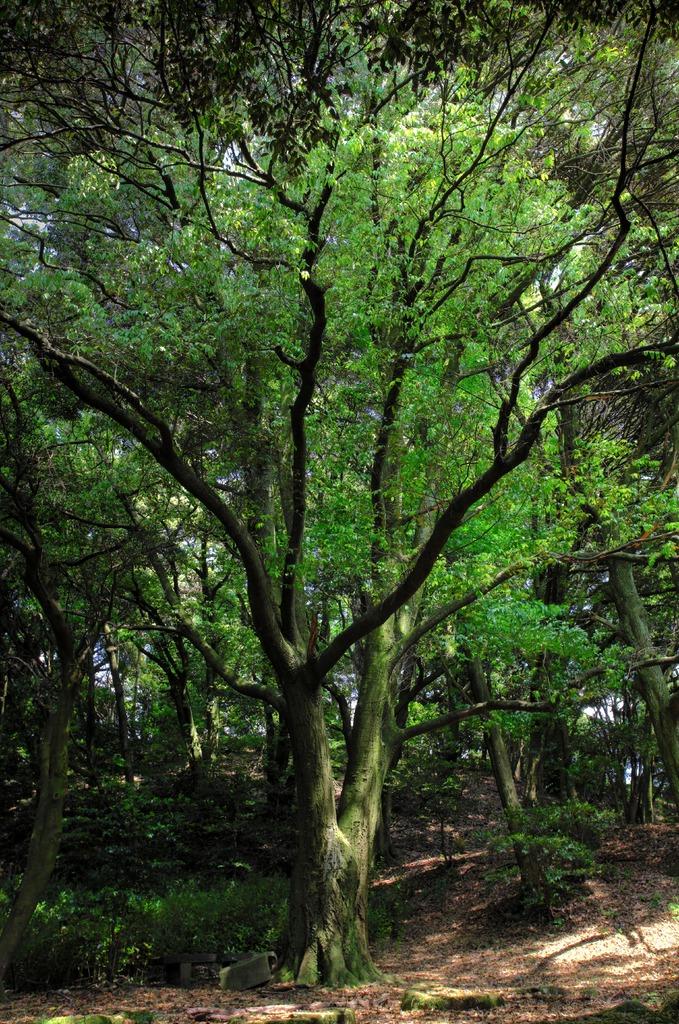 四王子の樹