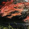 嵐山渓谷 ~冠水橋と紅葉~