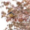 カワセミ ~キラキラ葉桜~【2010.04.13】