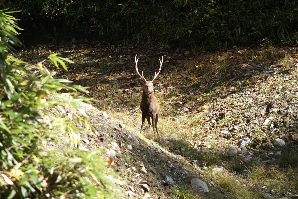 鹿 ~ 柳沢峠 ~