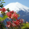 ツツジに富士山 ~日本一を背負う~