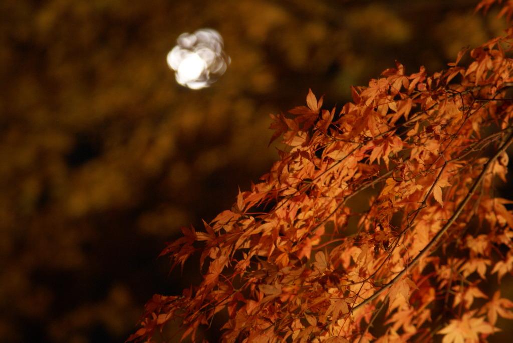 紅葉 ~月夜~