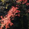 嵐山渓谷 ~赤く降り注ぐ~