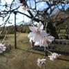 二季咲サクラ