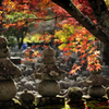 秋の手向け華