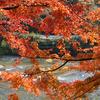 紅葉と久慈川