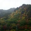 雨にぬれる秋の桧山
