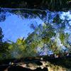 水面に青空と緑が映って
