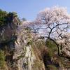 桜と乙女ヶ越と青い空