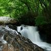 初夏の青葉の滝