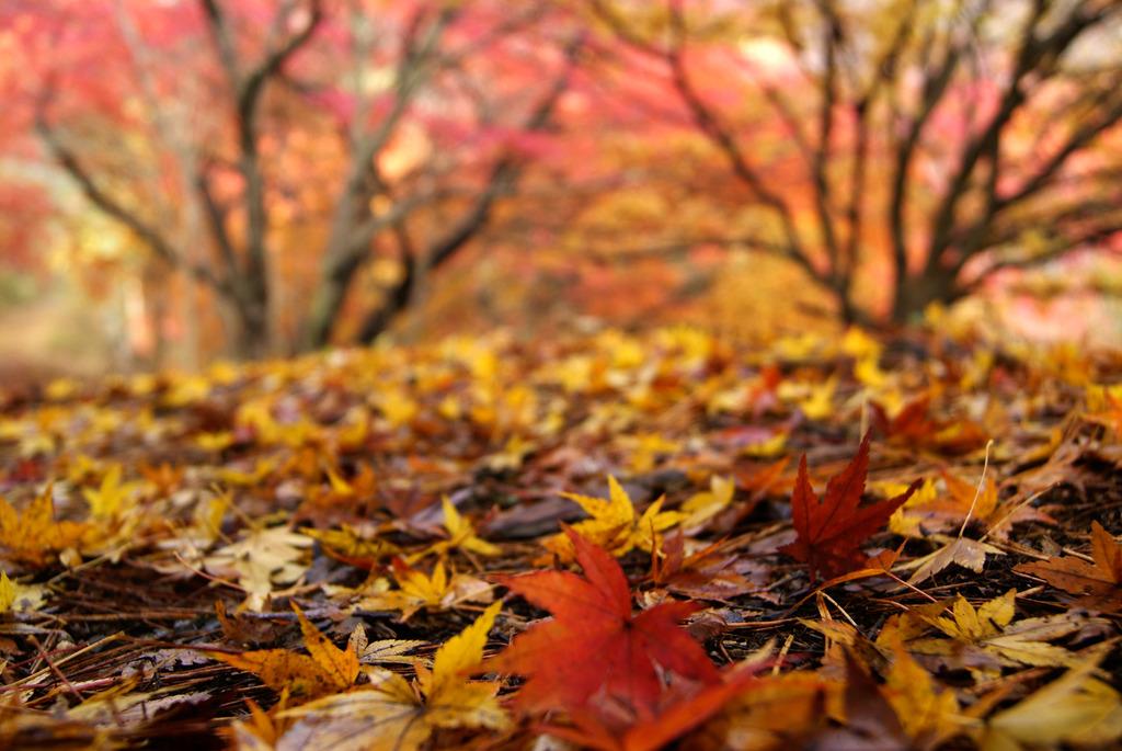 落ち葉と紅葉
