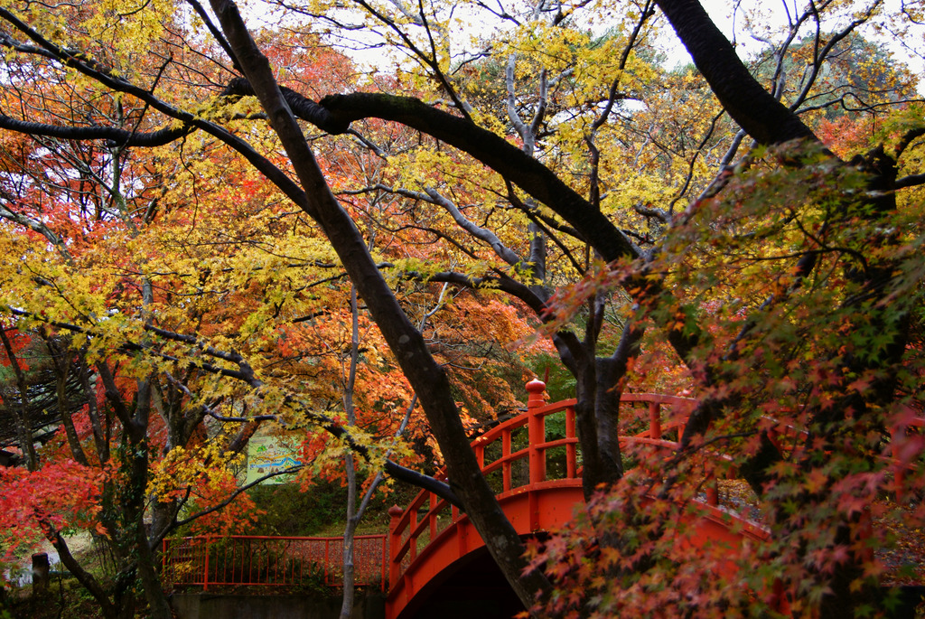 横から見た月見橋と紅葉