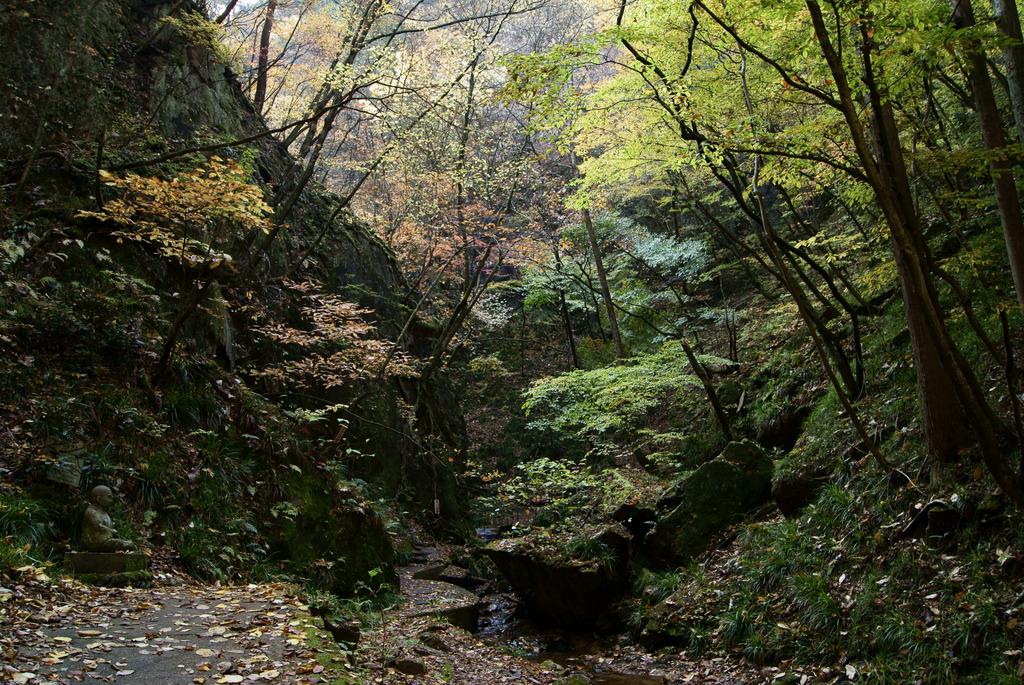 秋の夢想滝遊歩道とおりこうさん