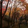 小萩の沢と紅葉