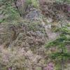 三ツ葉つつじと岩と松