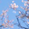 白い月と桜