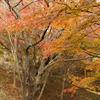 探鳥路入り口の紅葉