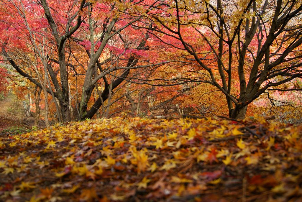 小萩の沢の紅葉と落ち葉