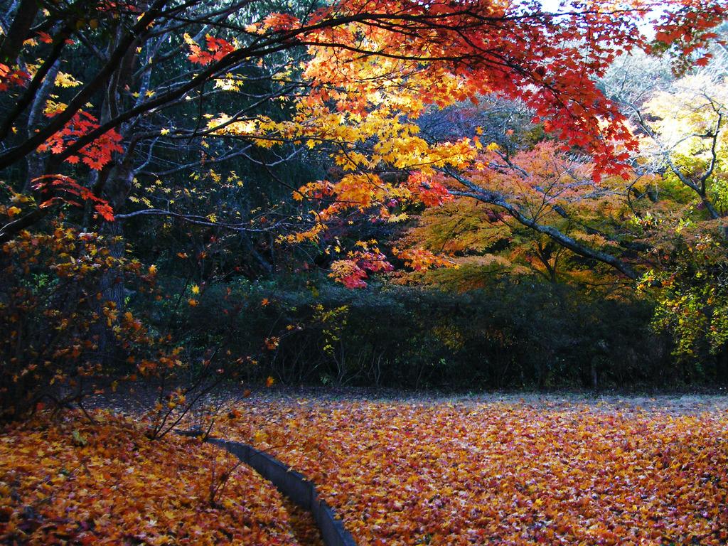 夢想苑の紅葉