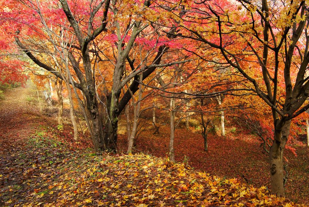 小萩の沢の秋