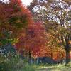 久慈川河川敷の紅葉