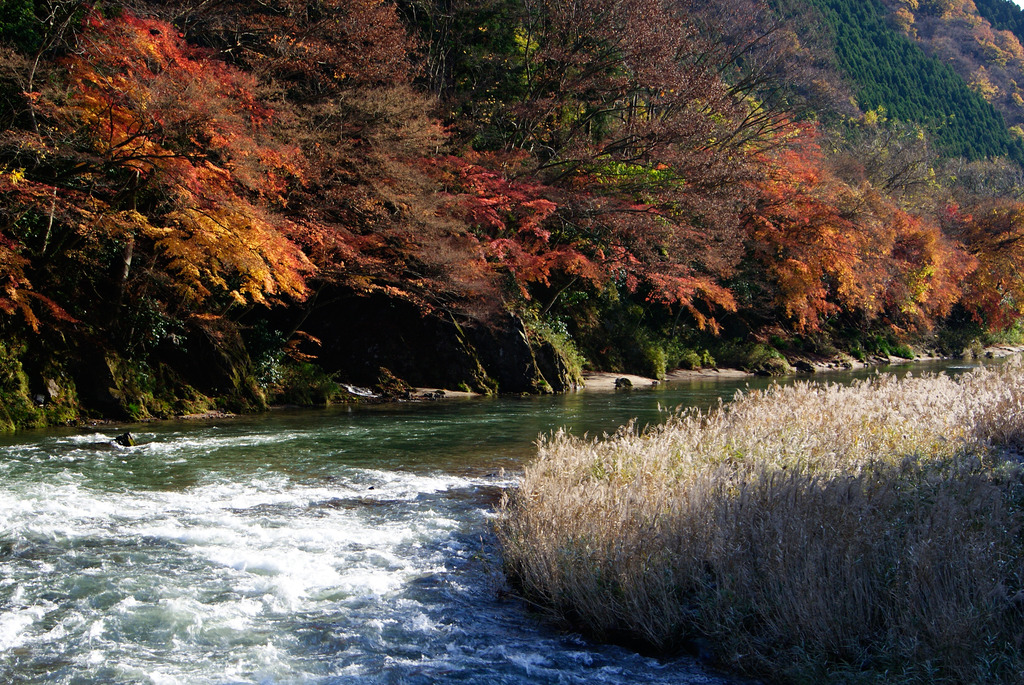久慈川の流れと中州のススキと対岸のもみじ
