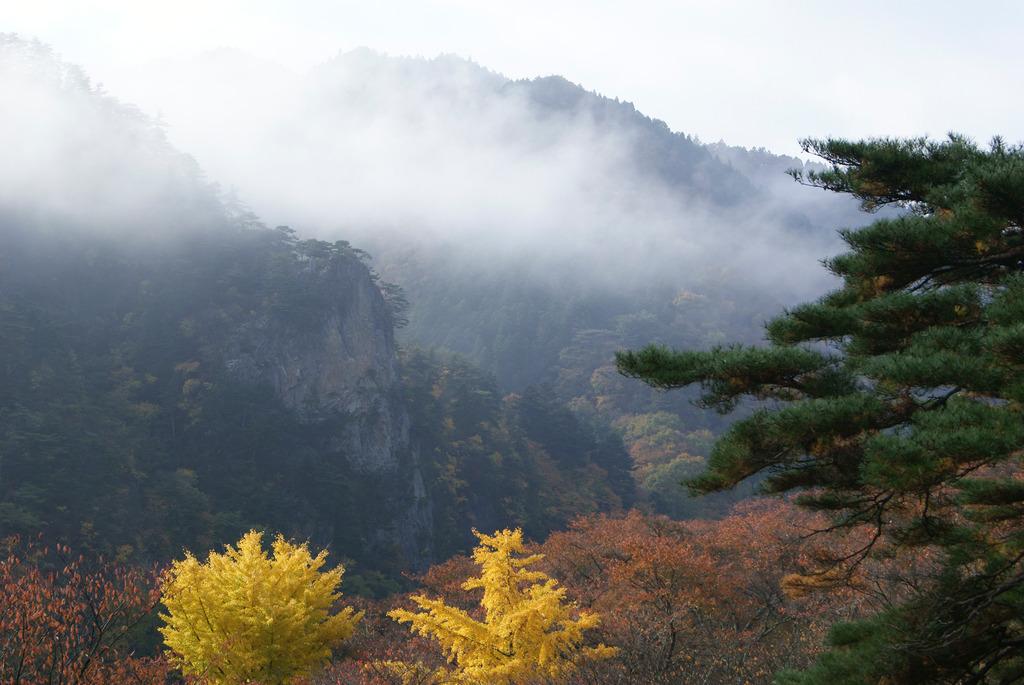 朝霧に包まれる乙女ヶ越と輝くイチョウ