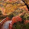 錦秋の月見橋
