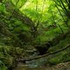 新緑の夢想滝川