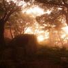 日が沈む森は霧の中