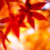 紅葉 神戸市立森林植物園⑤