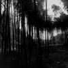 回春院の竹林