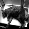 太っぱら~ トラ