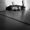 ロフトの端で寝る〜シロ