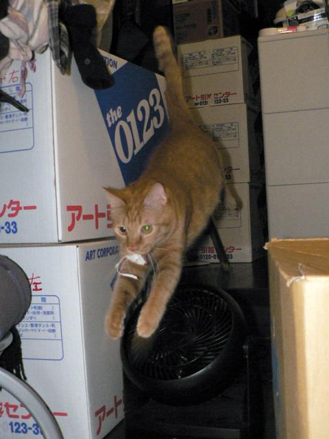 ネズミ♪〜ネズミ♪〜 トラ