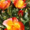 太陽の色に憧れて