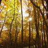 黄金に輝く森