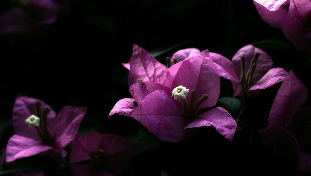 紫ぴんく。。。