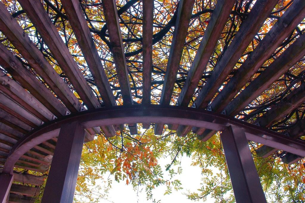 覆い被さる緑の屋根