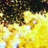 確かに進む秋の気配