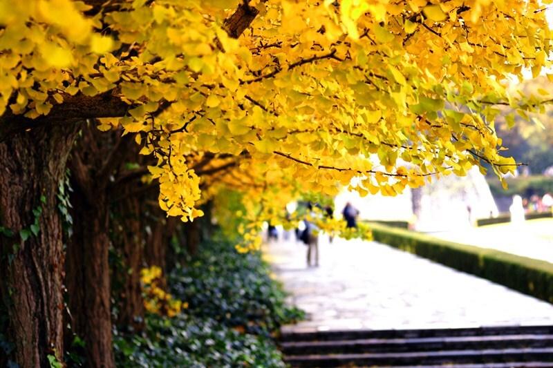 美しい秋色!