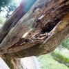 蔓の根 中空